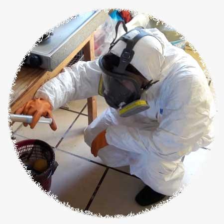 Grupo Zargo Fumigaciones - control de plagas