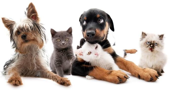 https://0201.nccdn.net/4_2/000/000/038/2d3/puppies.jpg
