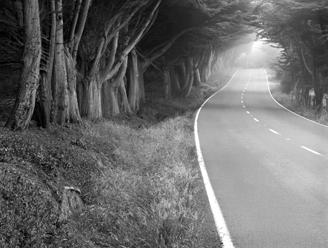 Bodega Road