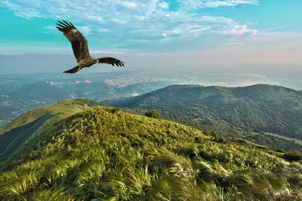 Eagle Soaring Near a Mountain peak