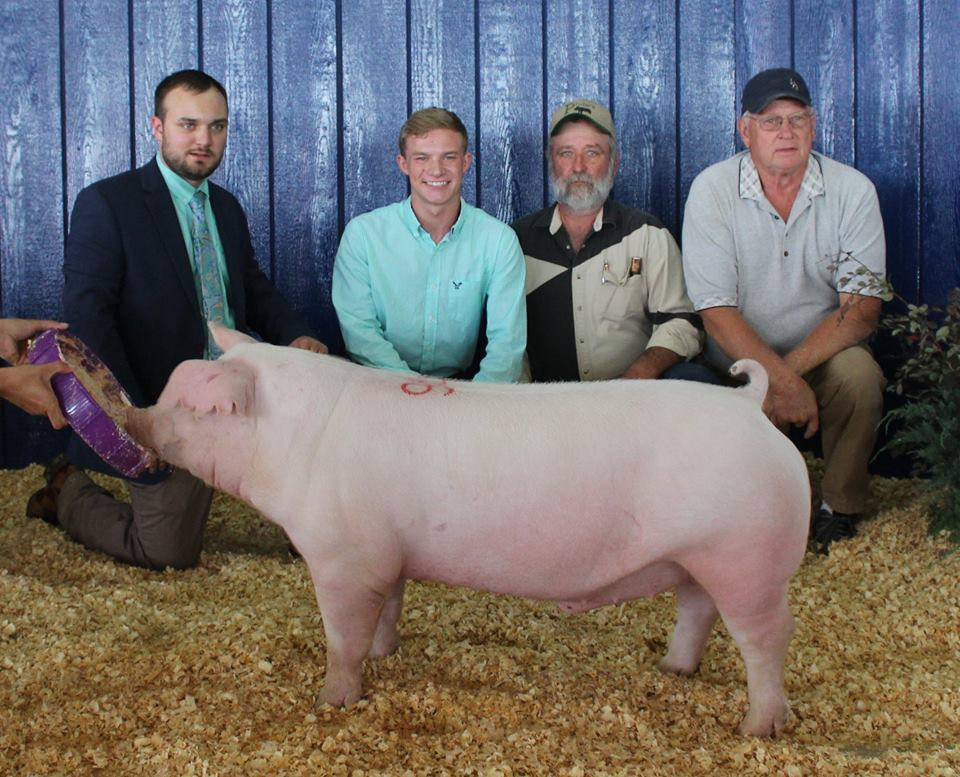 Brandon Thomas 2017 Tennessee State Fair Reserve Champion Chester Barrow
