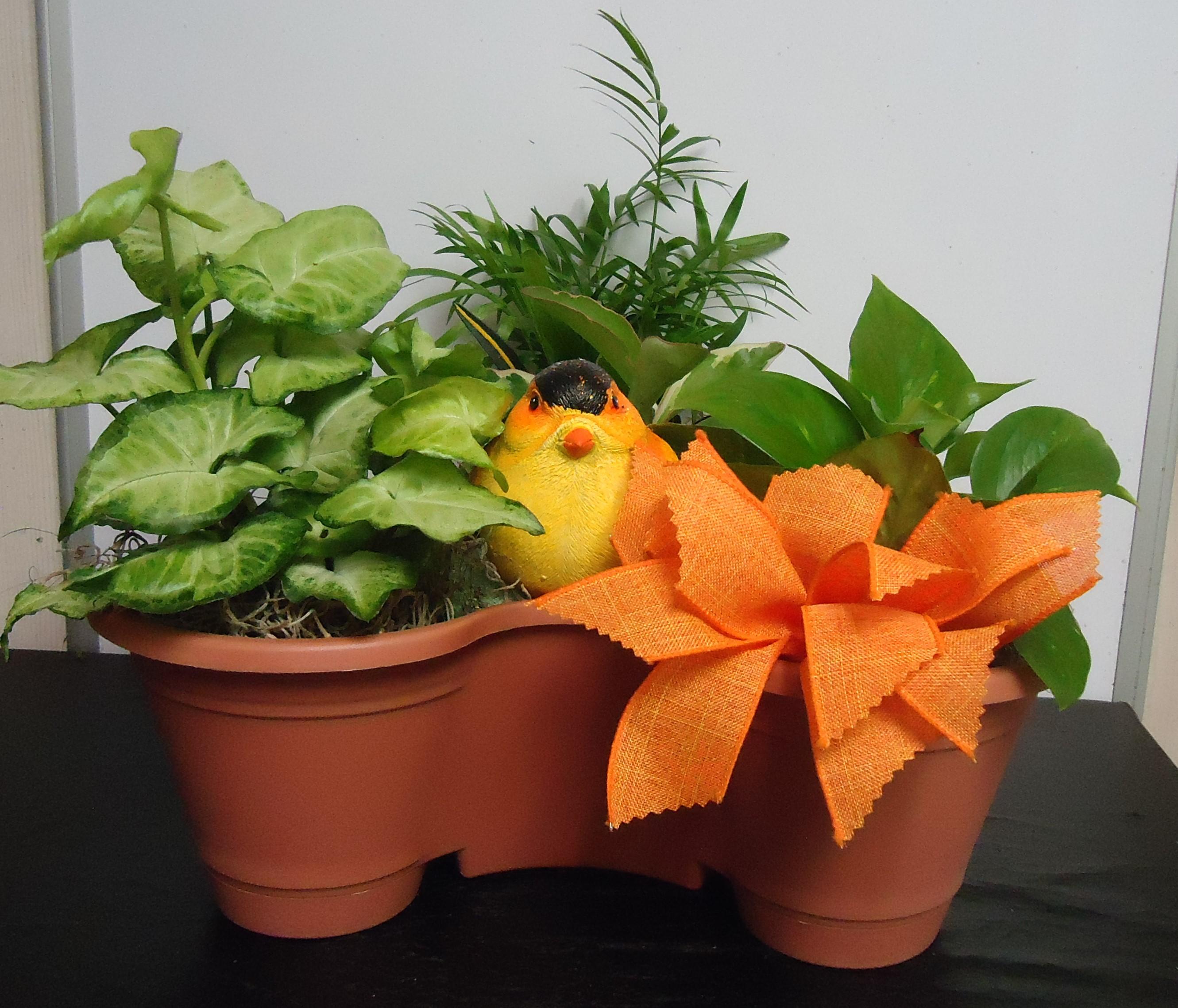 (14) Three Plant Combo W/Bird $45.00