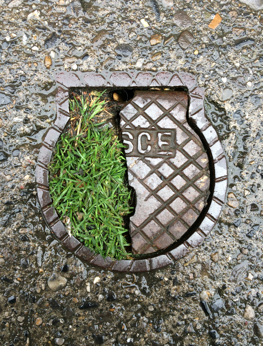 A wet, broken, shell-shaped metal inspection cover half filled with green grass.