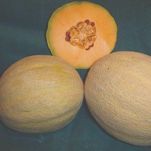 Melon Verona