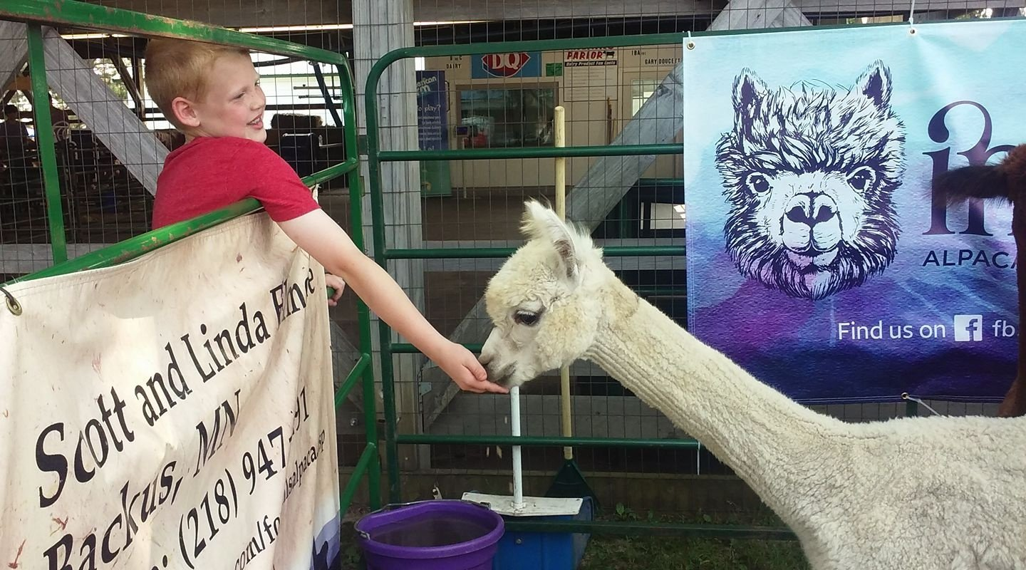 Kid Petting an Alpaca
