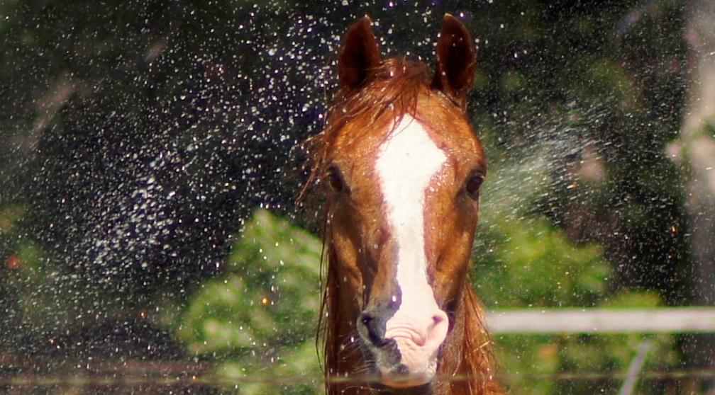https://0201.nccdn.net/4_2/000/000/046/6ea/IBN-TAAM-RUD-standing-in-sprinklerhead.jpg
