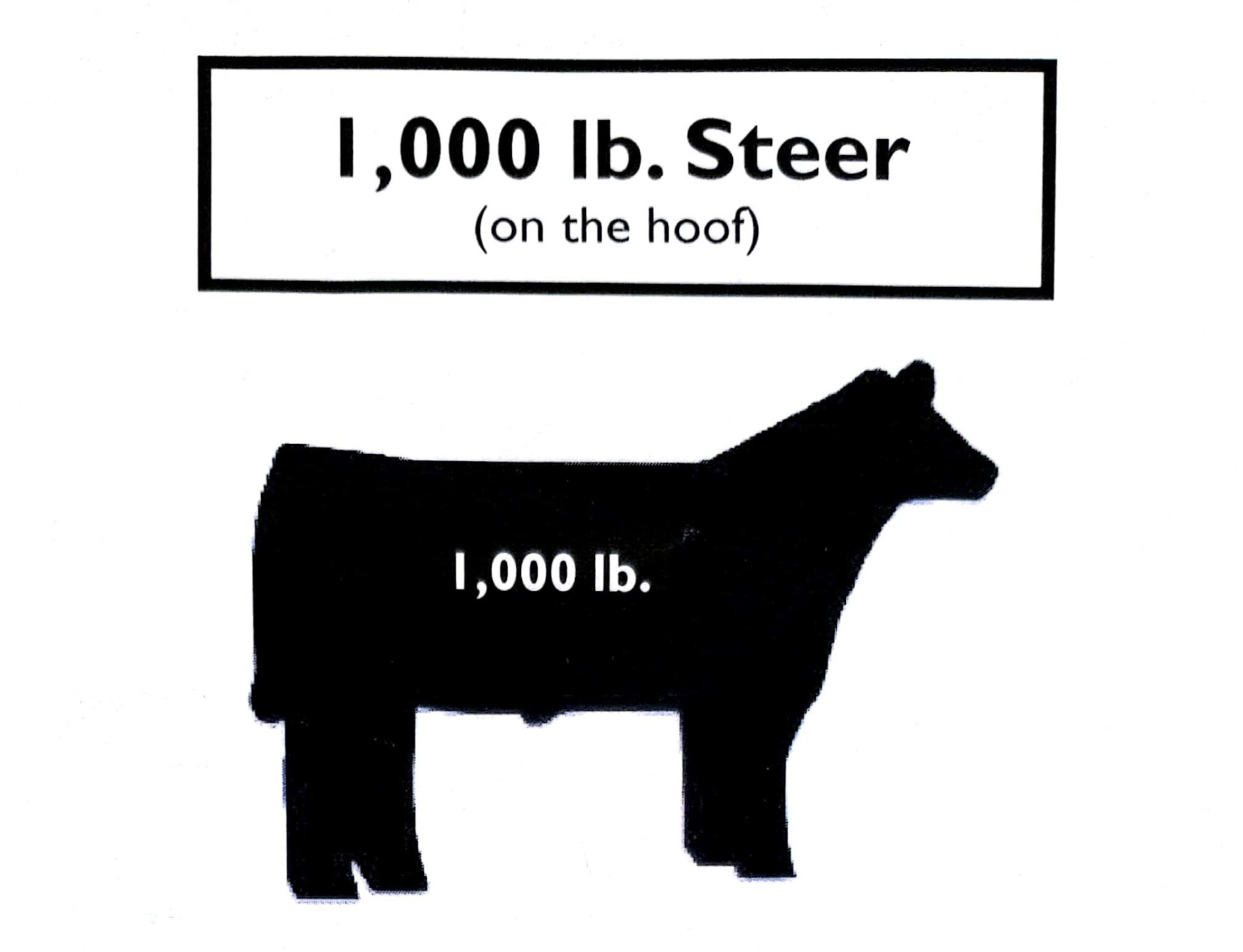 Steer Graphic