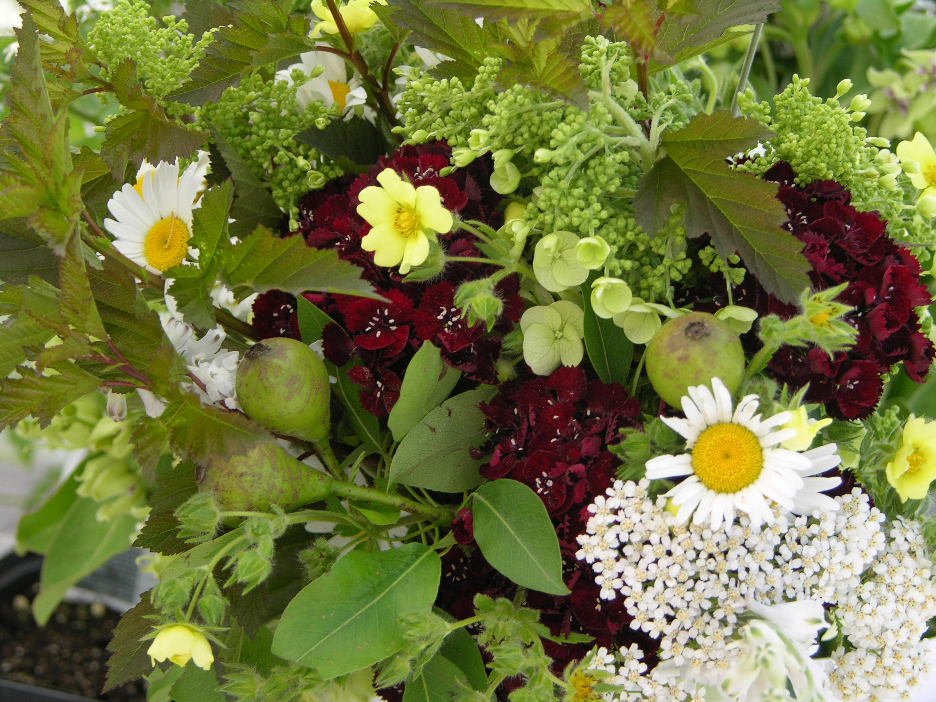 https://0201.nccdn.net/4_2/000/000/046/6ea/flower-bouquet-2010-3-min-3264x2448.jpg