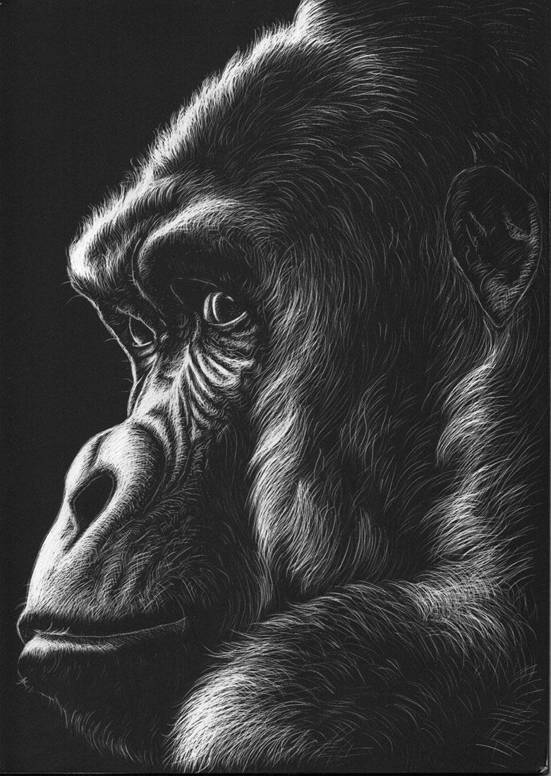 Gorilla, 2020