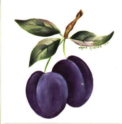 https://0201.nccdn.net/4_2/000/000/046/6ea/plums.jpg