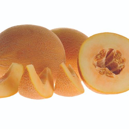 Melon Dove