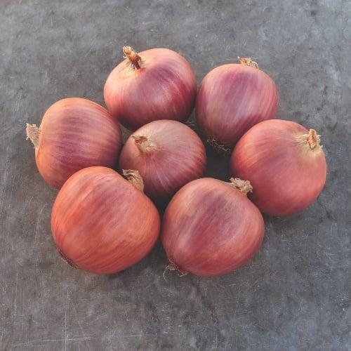 Onion Blush