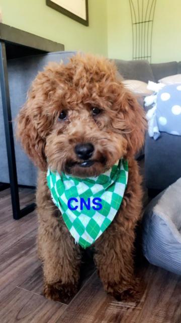 CNS Mascot Baxter