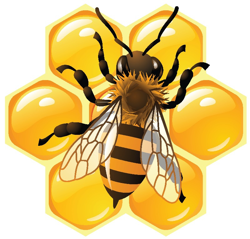 Bee_on_hive_only.jpg