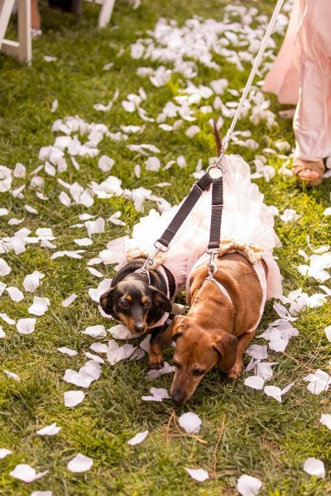 Flower Girl Pups!