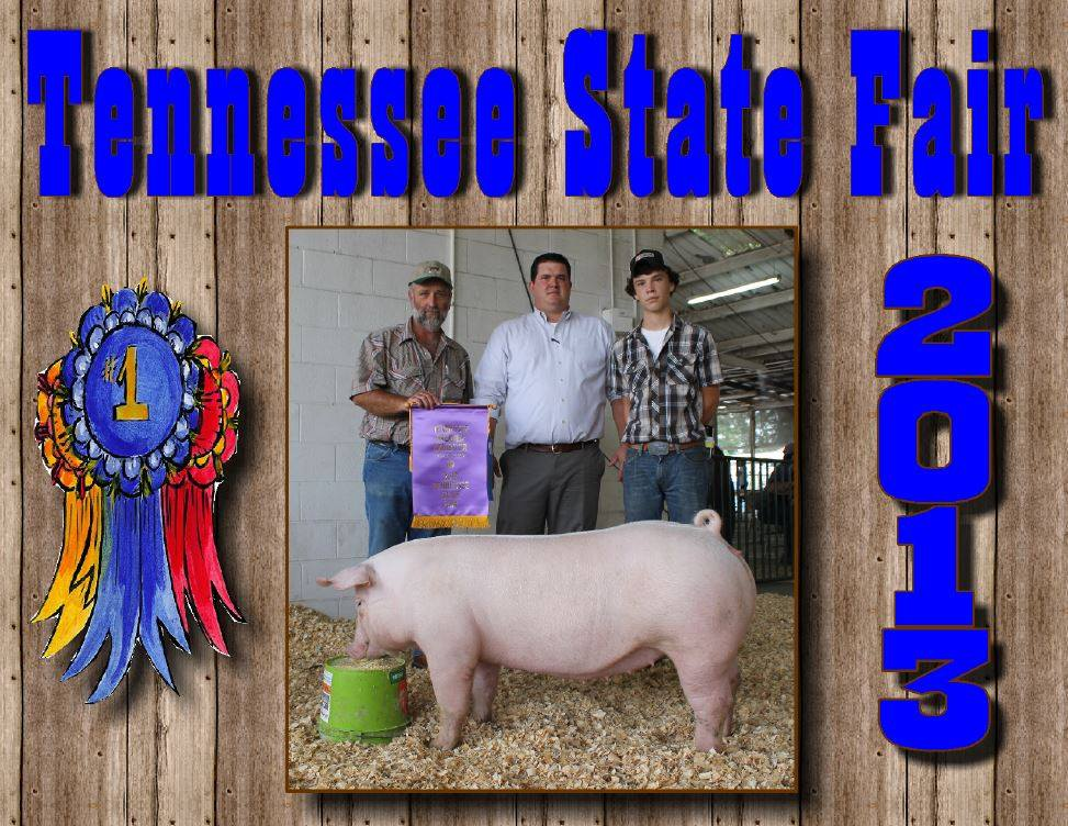 Clay Prater: Grand Champion Chester White Gilt Reserve Champion Supreme Overall Gilt 2nd in class Chester White Gilt behind Champion 4th in class Crossbred Gilt 1st in 9-12 grade Showmanship 1st in 9-12 grade Skillathon Tennessee State Premier Exhibitor 9-12 Grade Division