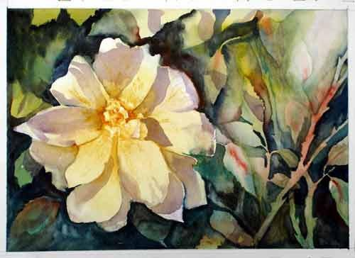 Sunlit Rose .. Watercolour