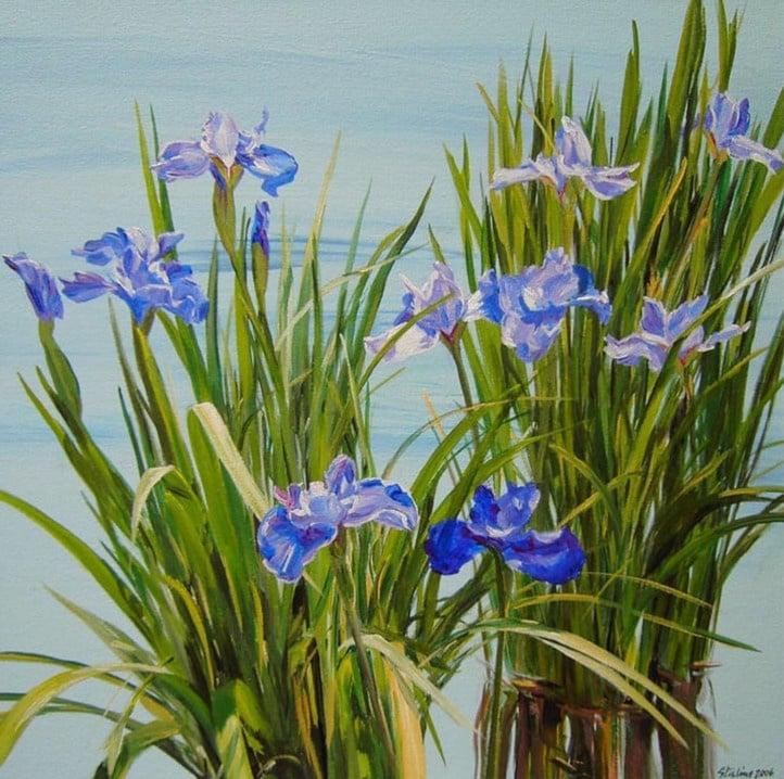 Siberian Iris 24x24
