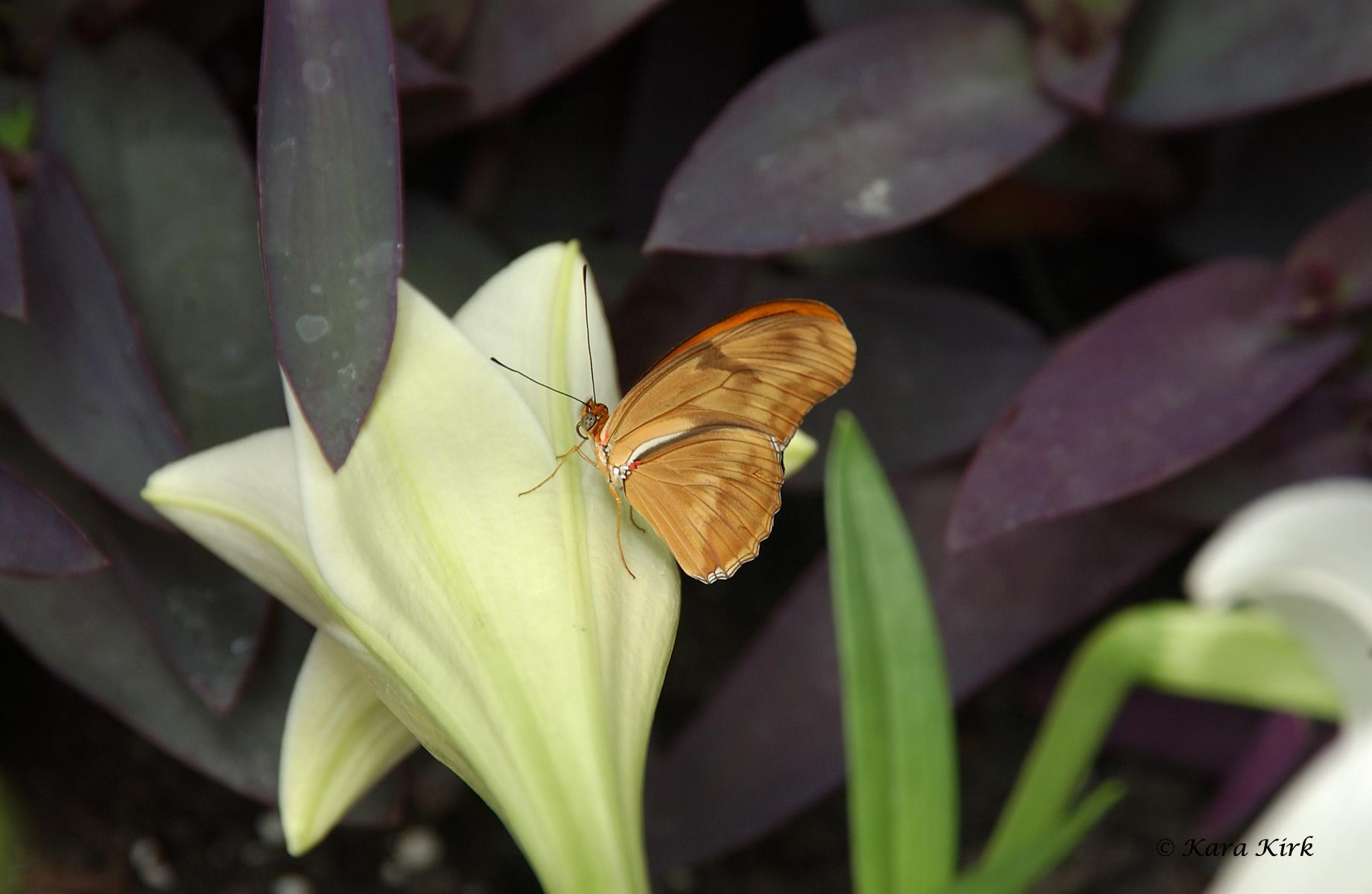 https://0201.nccdn.net/4_2/000/000/057/fca/04-17-11-Krohn-Conservatory-Butterfly-Show--Cinti--OH-88-4x6-1842x1200.jpg