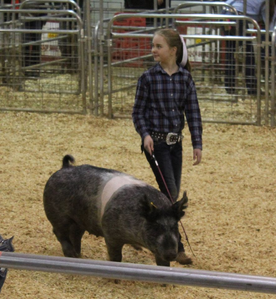 Hannah Sanders 2016 Tennessee State Market Hog Show