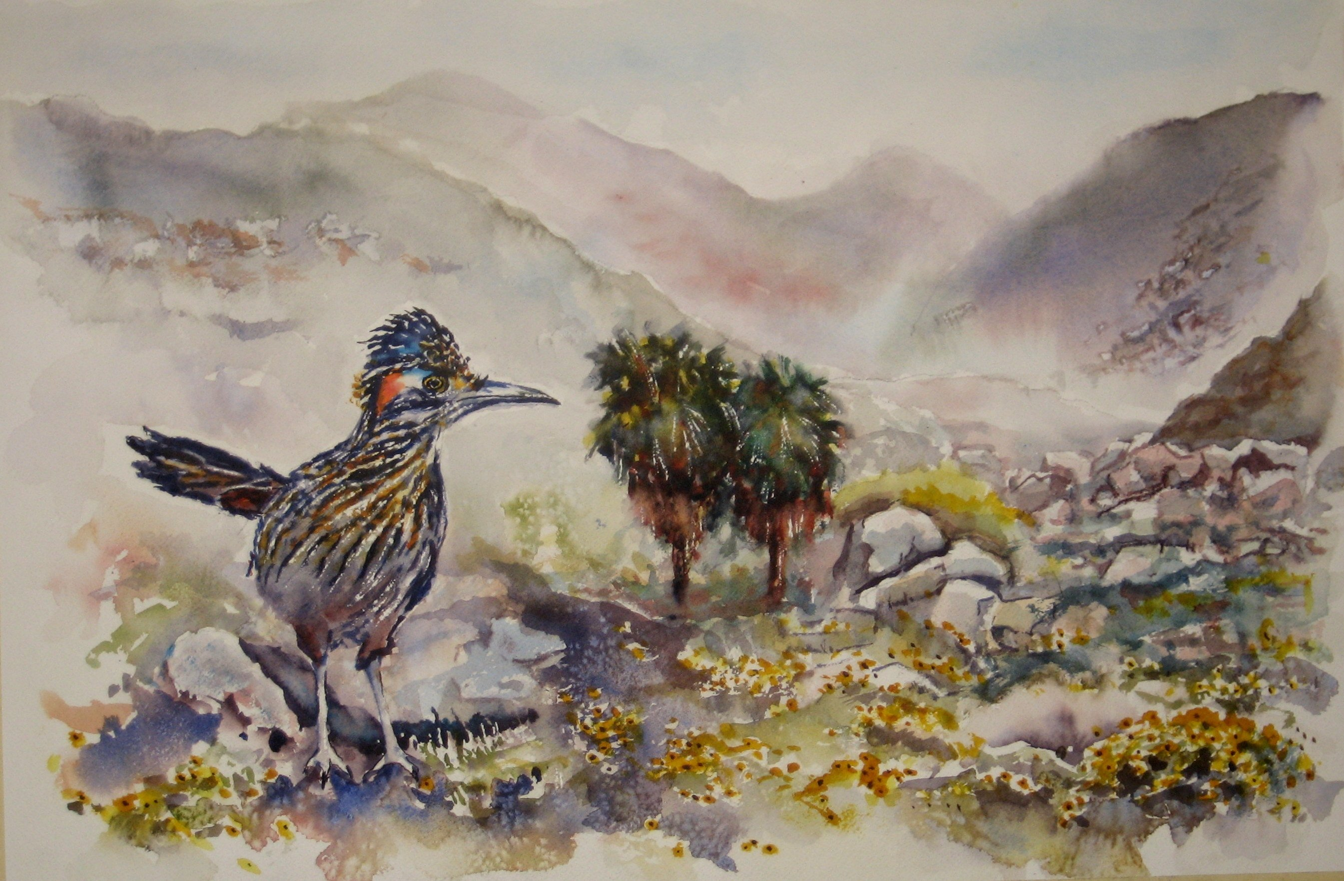 Roadrunner Hellhole Canyon