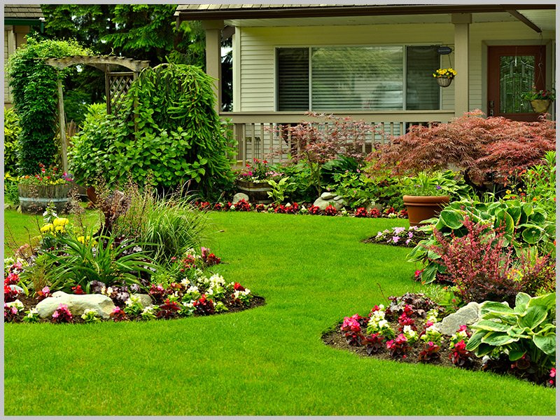 Flower garden and residential yard||||
