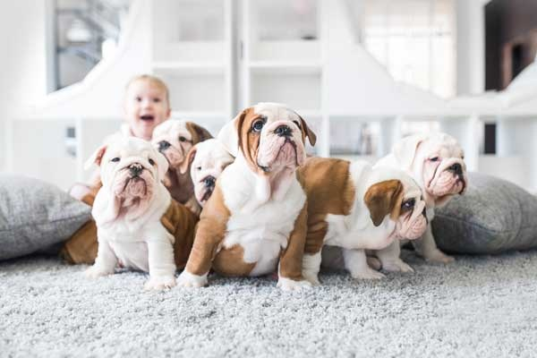 Cute Puppies on the Carpet