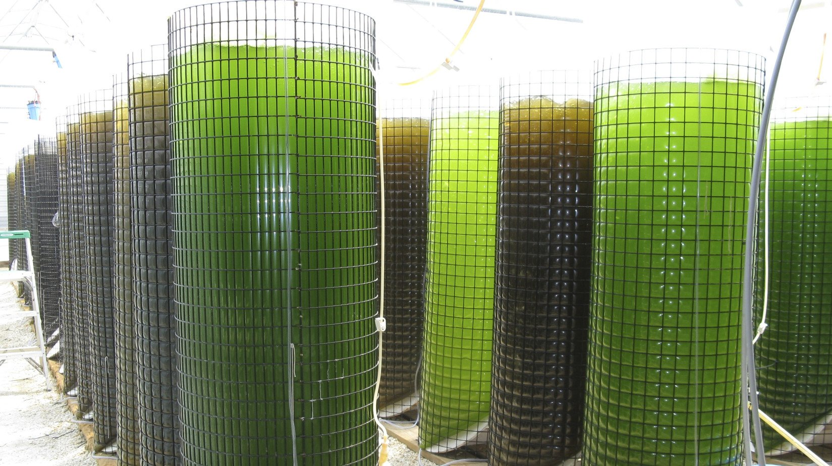 A DIFFERENT SPECIES OF ALGAE CAN BE GROWN IN EACH BIOREACTOR  SEACAPS CONTINUOUS CULTURE PRODUCES A HIGH CONSISTENT NUTRIENT VALUE ALGAE FOR YOUR NEEDS