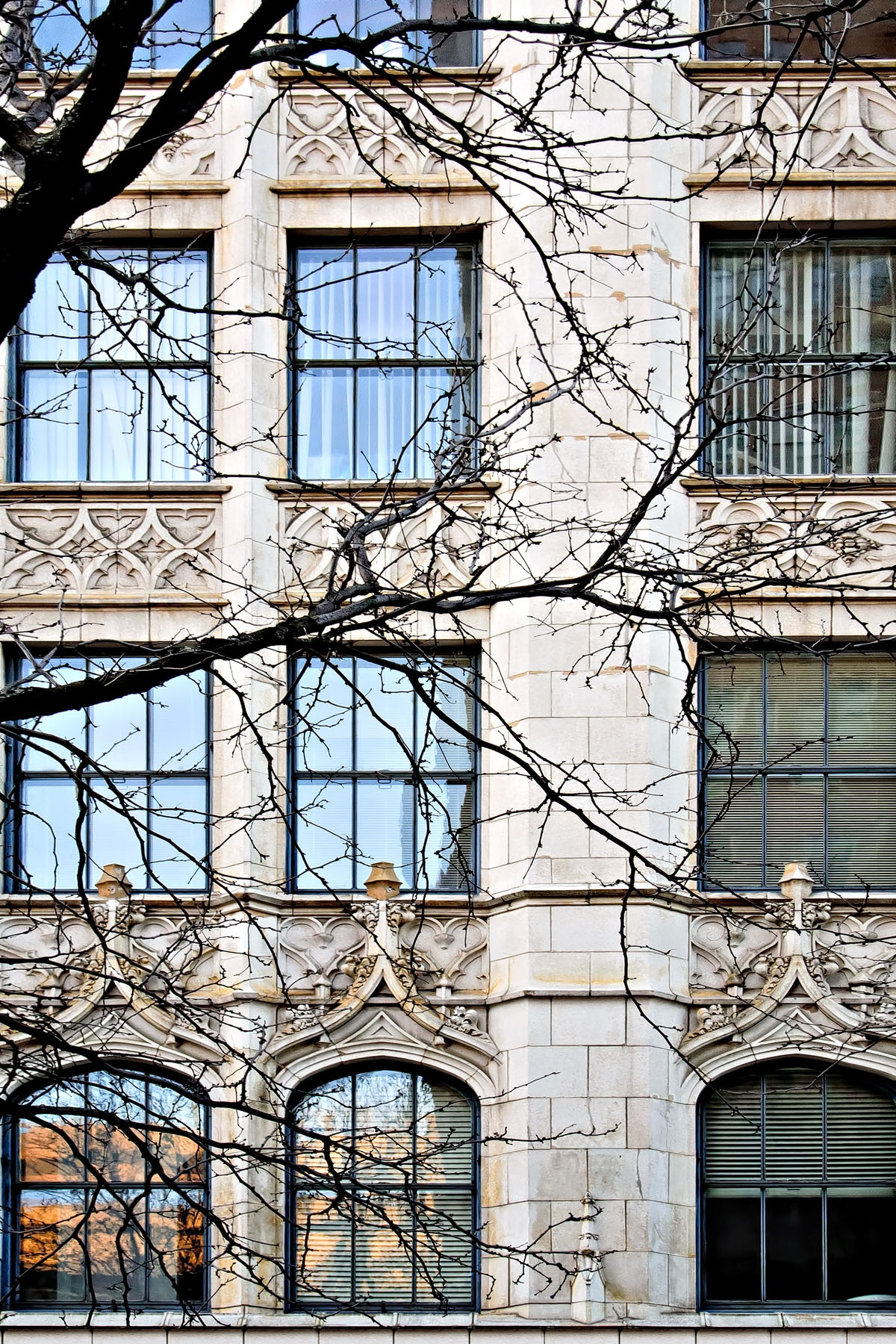 "TREE AND WINDOWS - I just couldn't pass up this ""winter only"" view of a building in Cincinnati."