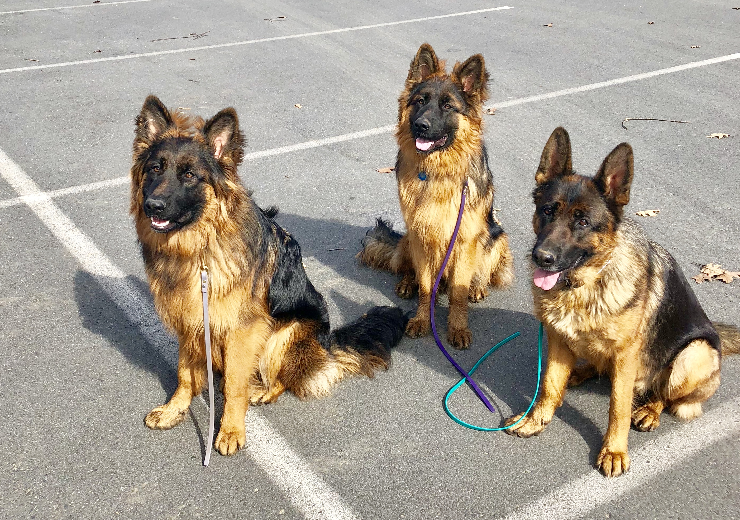 Sabri With Two Dogs