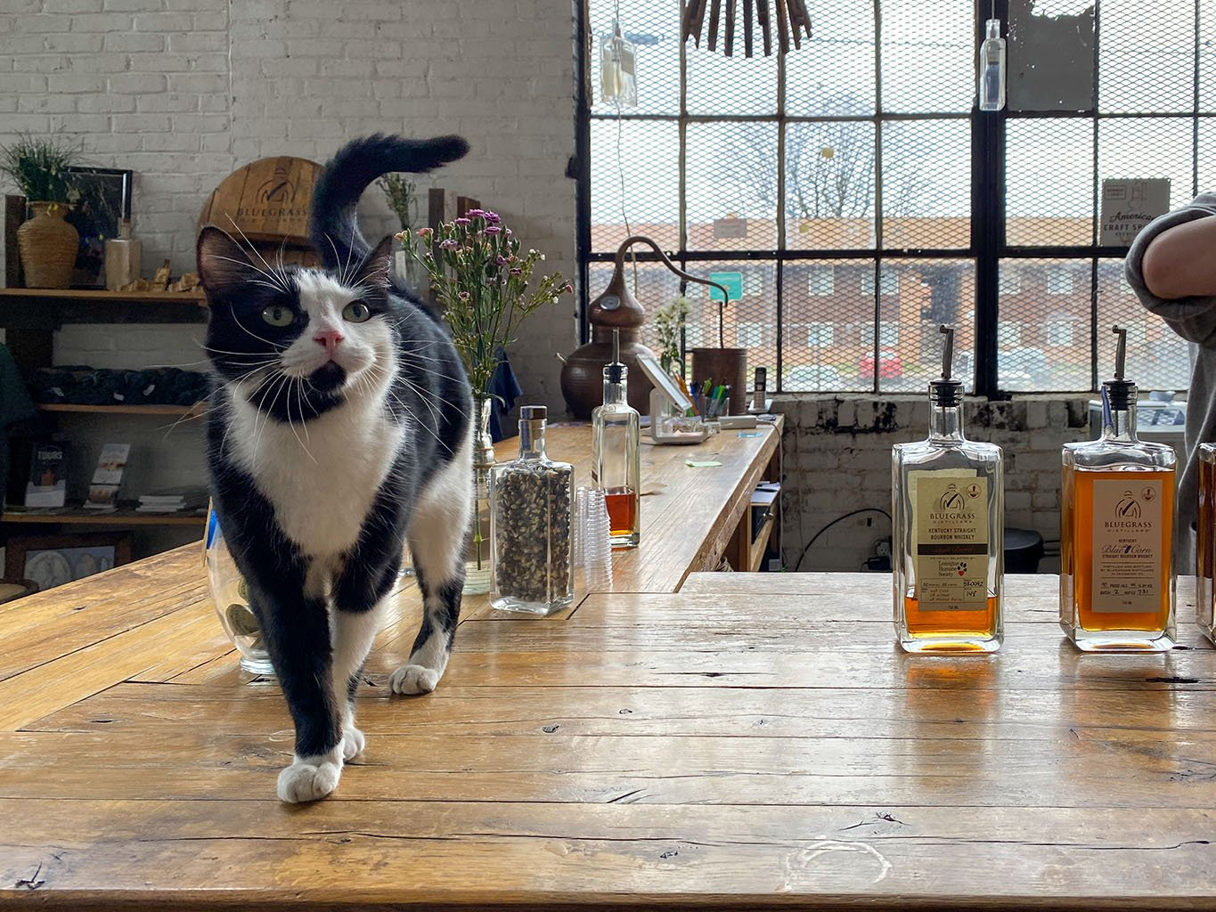 Tipsy The Cat -Bluegrass Distillers