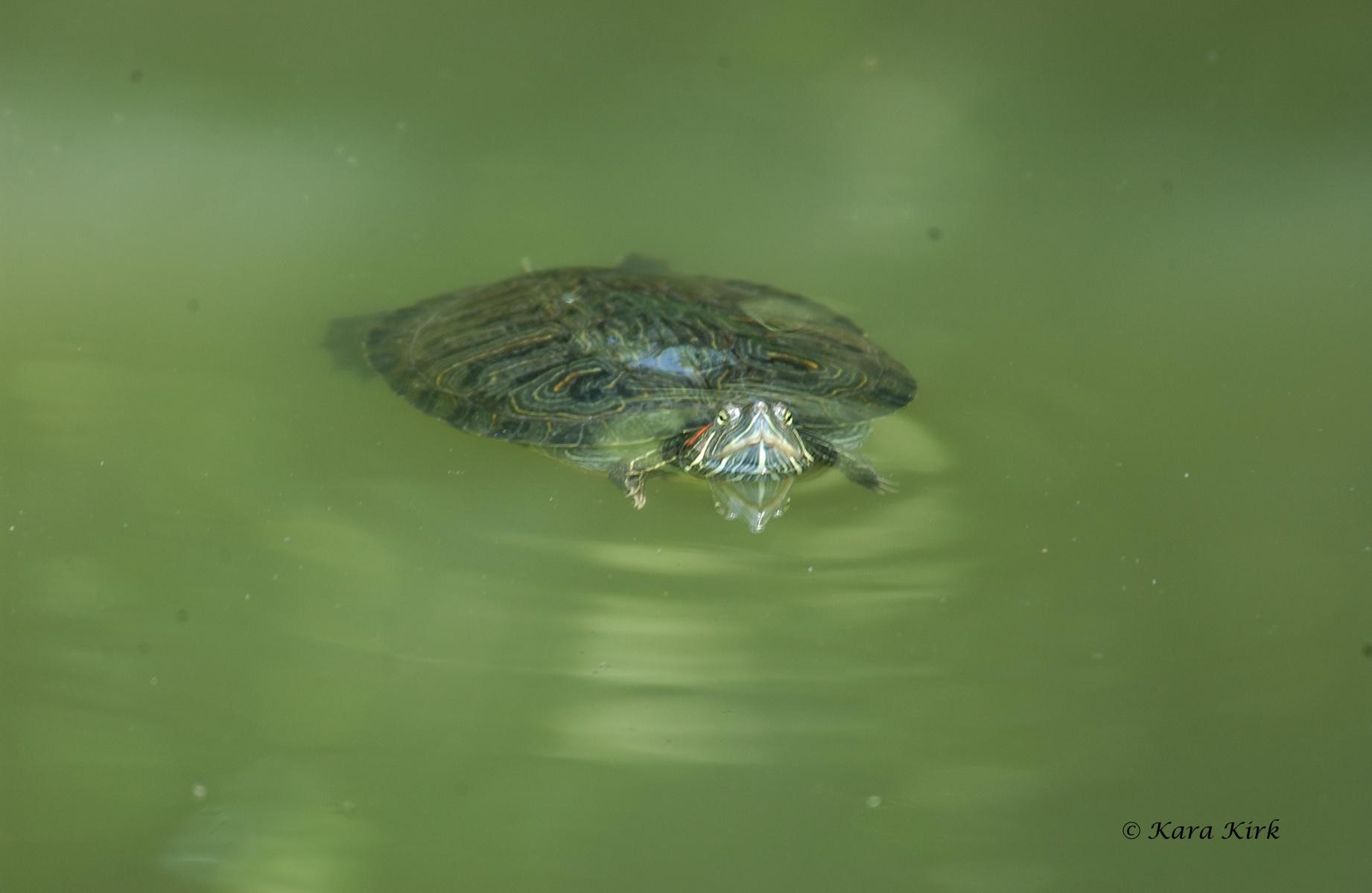 https://0201.nccdn.net/4_2/000/000/064/d40/05-29-11-Cincinnati-Zoo--Cinti--OH-142-4x6-1842x1200.jpg