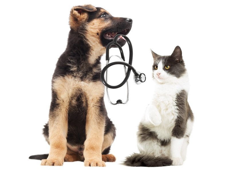 Cat And A Puppy With A Stethoscope