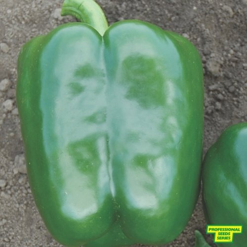 Pepper PS 09941819 X5R®