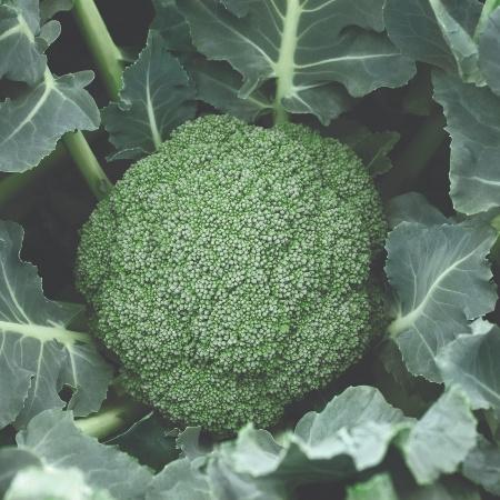 Broccoli Destiny F1