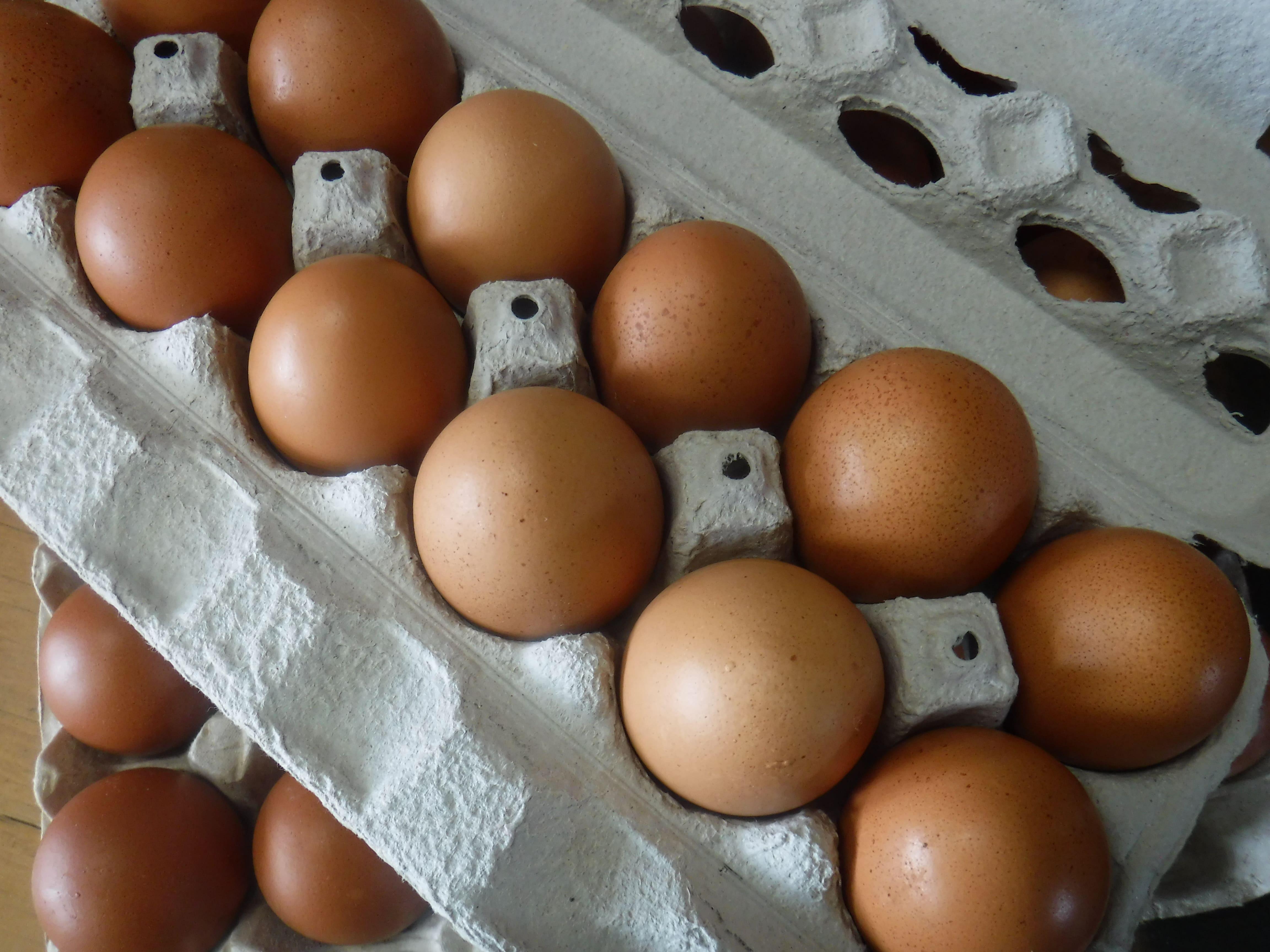 https://0201.nccdn.net/4_2/000/000/064/d40/fresh-eggs-min-4608x3456.jpg