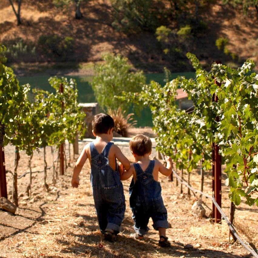 Boys In the Vineyard - Napa