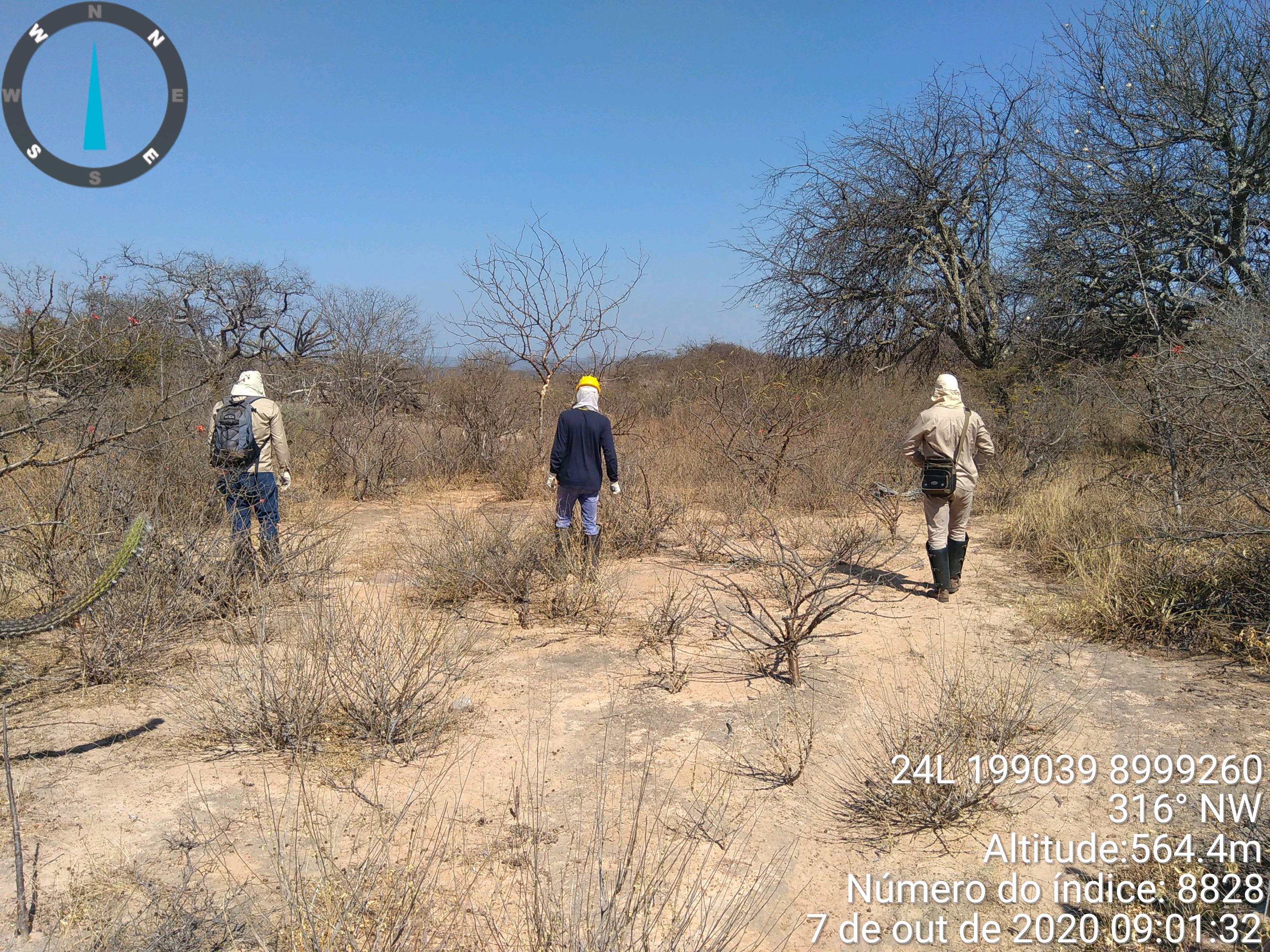 Caminhamento em linha, na área do Sítio Arqueológico Fazenda Cágados – Município de Dom Inocêncio – PI.