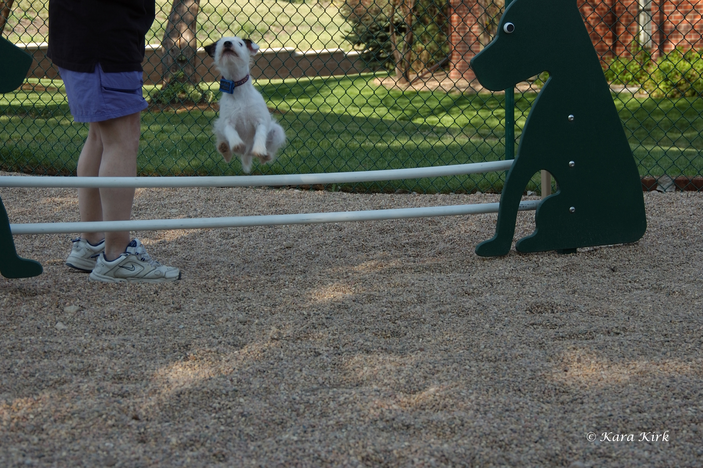 https://0201.nccdn.net/4_2/000/000/071/260/05-08-07-Keahi-Dog-Park-CCW-Greeley--CO-5-4x6.jpg