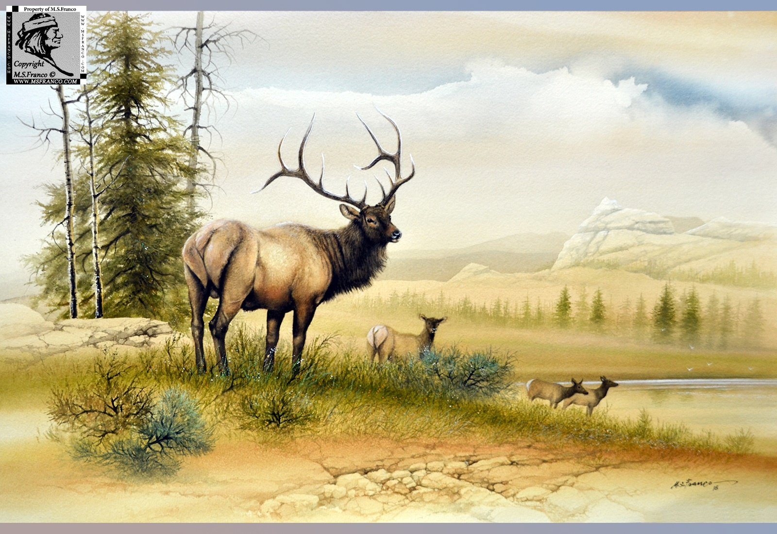""" Elk at the High Country """