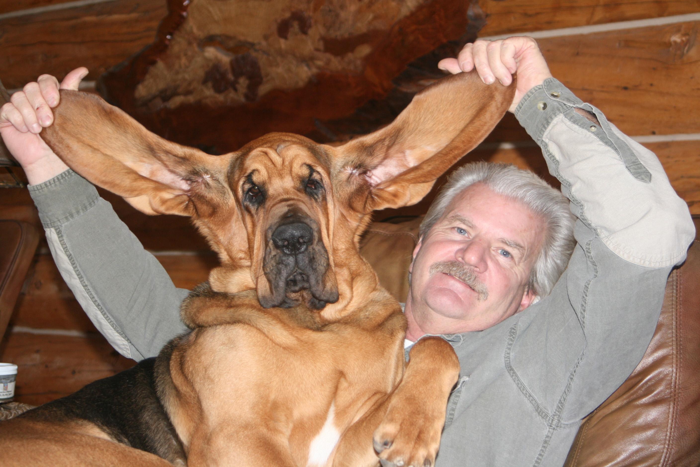 https://0201.nccdn.net/4_2/000/000/071/260/bloodhound-ears-sebastian-dave.jpg