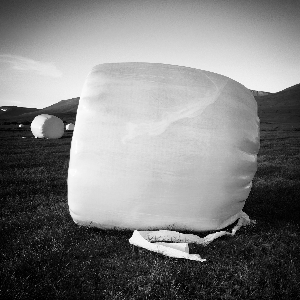Shiny white plastic covers a series of round hay bales in a grassy landscape.