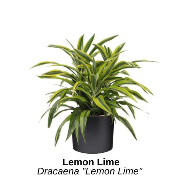 https://0201.nccdn.net/4_2/000/000/071/260/lemon-lime.png