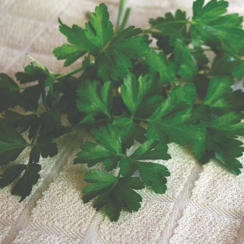 Dark Green Italian