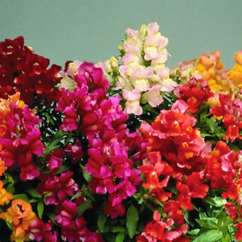 Floral Showers Mix