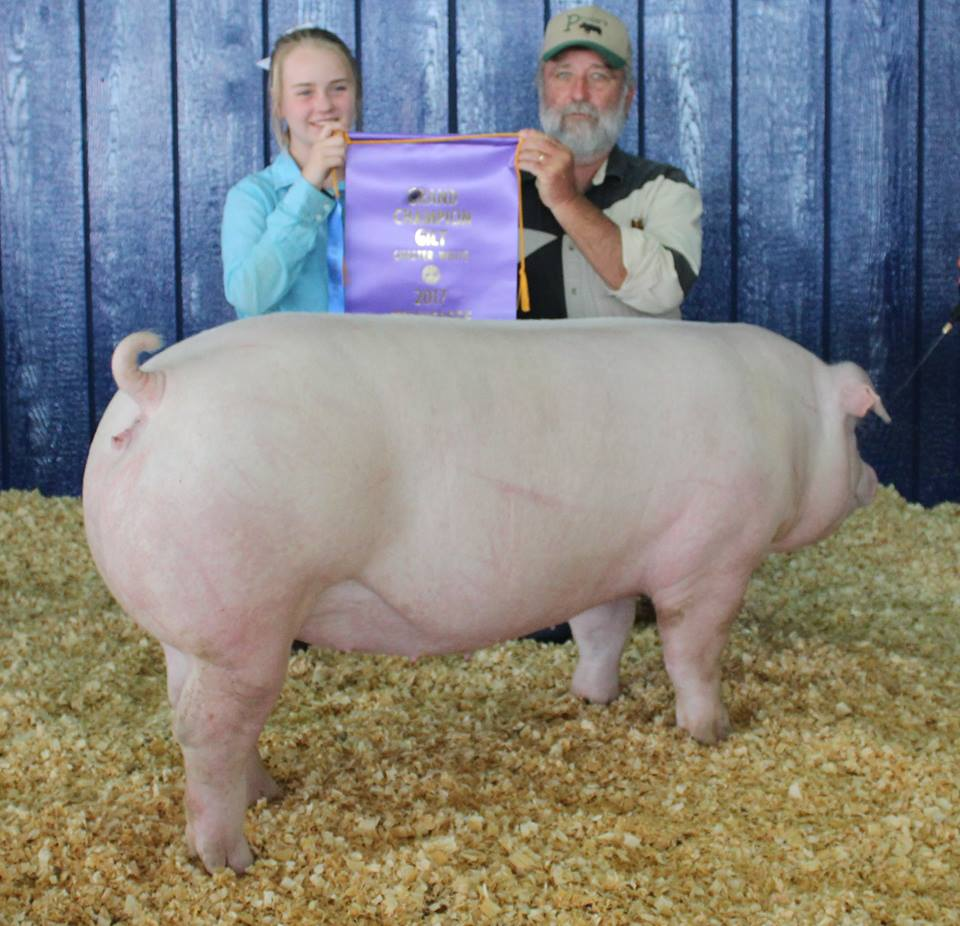 Hannah Sanders 2017 Tennessee State Fair Champion Chester White Gilt