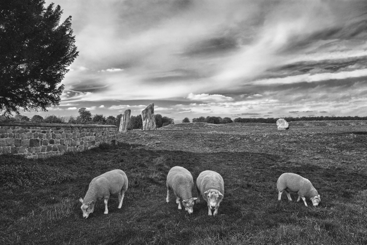 Avebury Sheep Pasture