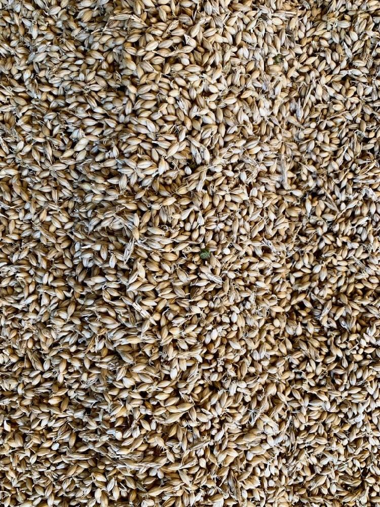 Hillrock Estate Distillery malting barley