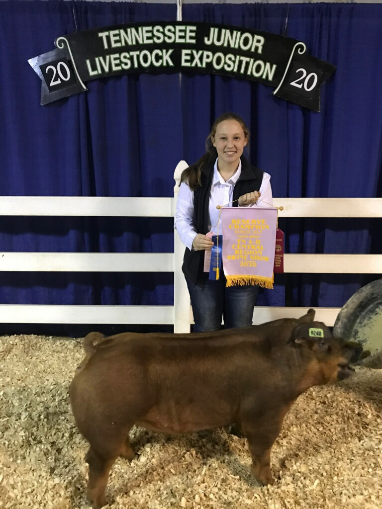 Samantha Calvetti 2020 Tennessee Central Region Show Reserve Champion Duroc Gilt