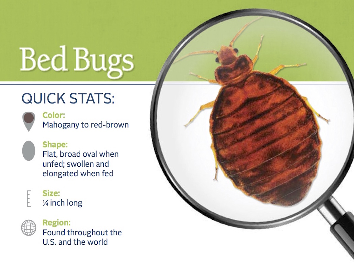 https://0201.nccdn.net/4_2/000/000/076/de9/bed-bug-pest-id-card_front.jpg